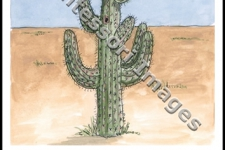 Desert Life and the Saguaro Cactus – 3 pt cards (only)