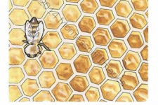 The World of Honeybees